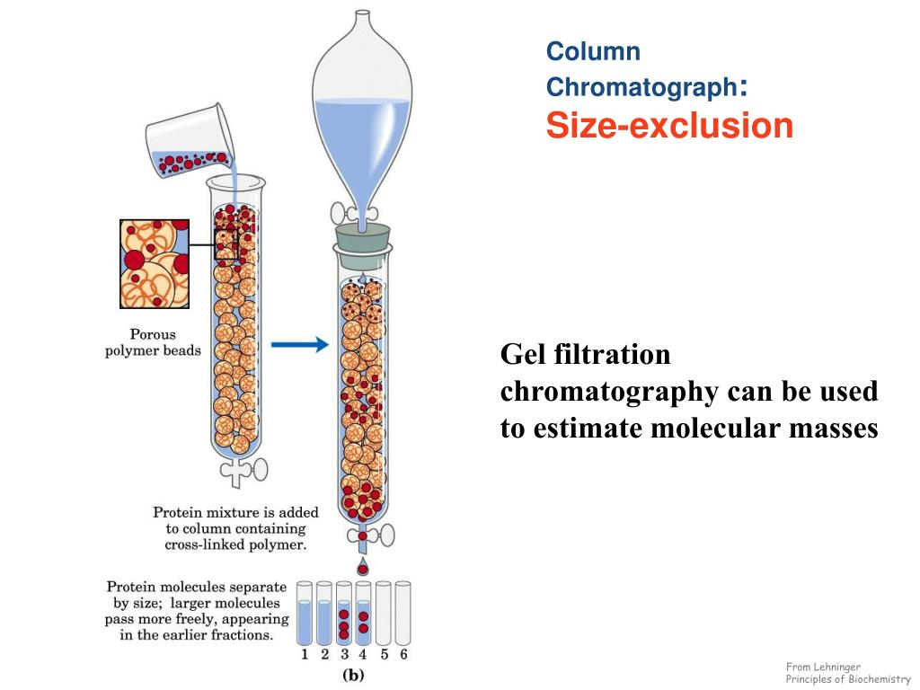Ion Exchange Chromatography Schematic Diagram Not Lossing Wiring Block In Powerpoint Ppt Techniques Of Protein Purification Procedure