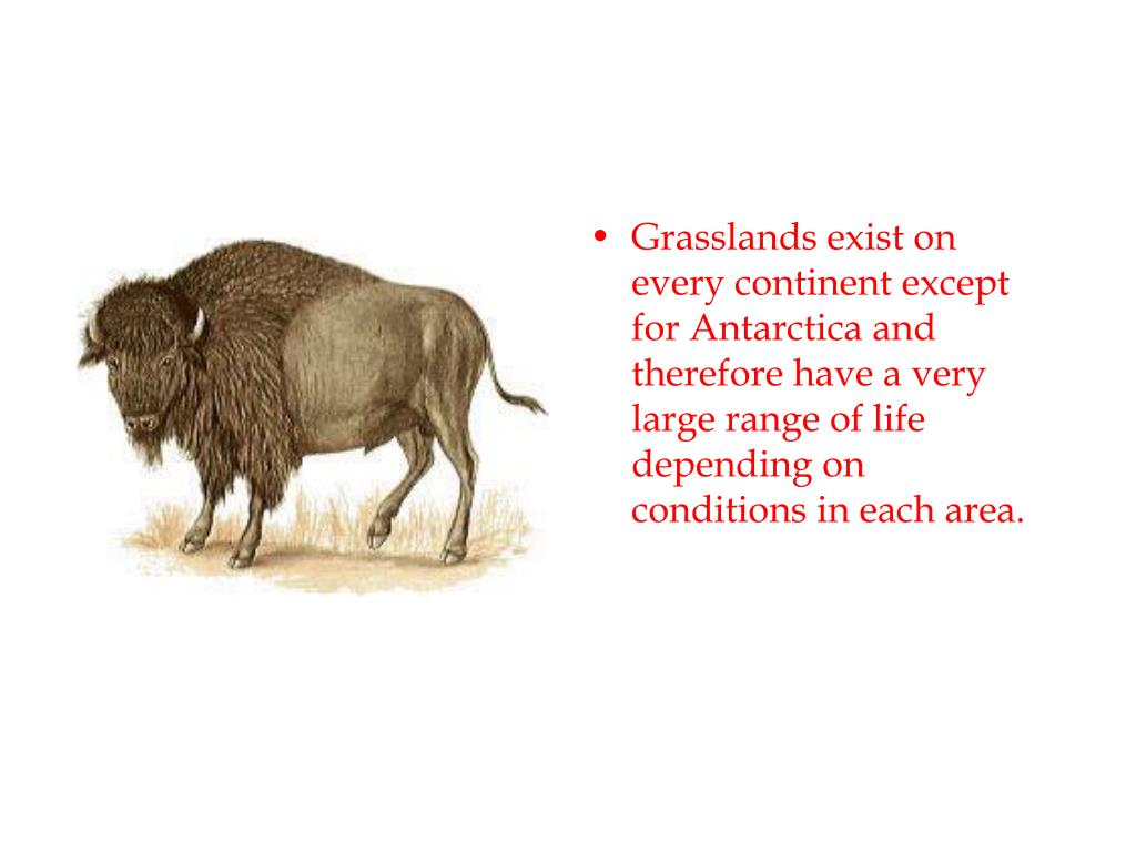 Grasslands exist on every continent except for Antarctica and therefore have a very large range of life depending on conditions in each area.