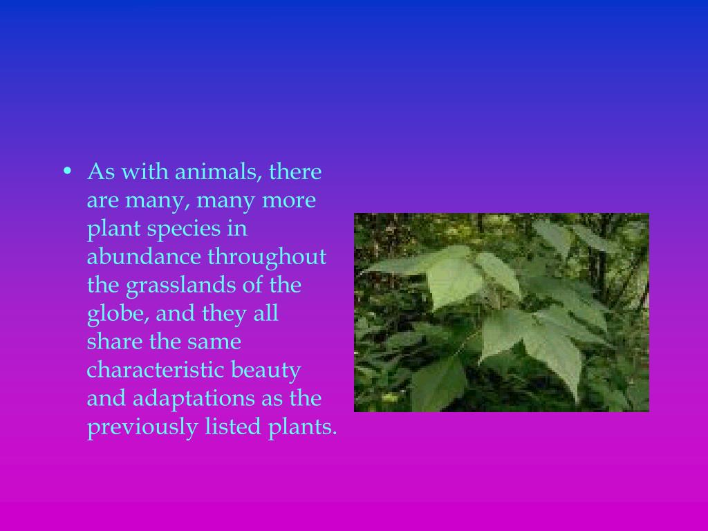 As with animals, there are many, many more plant species in abundance throughout the grasslands of the globe, and they all share the same characteristic beauty and adaptations as the previously listed plants.