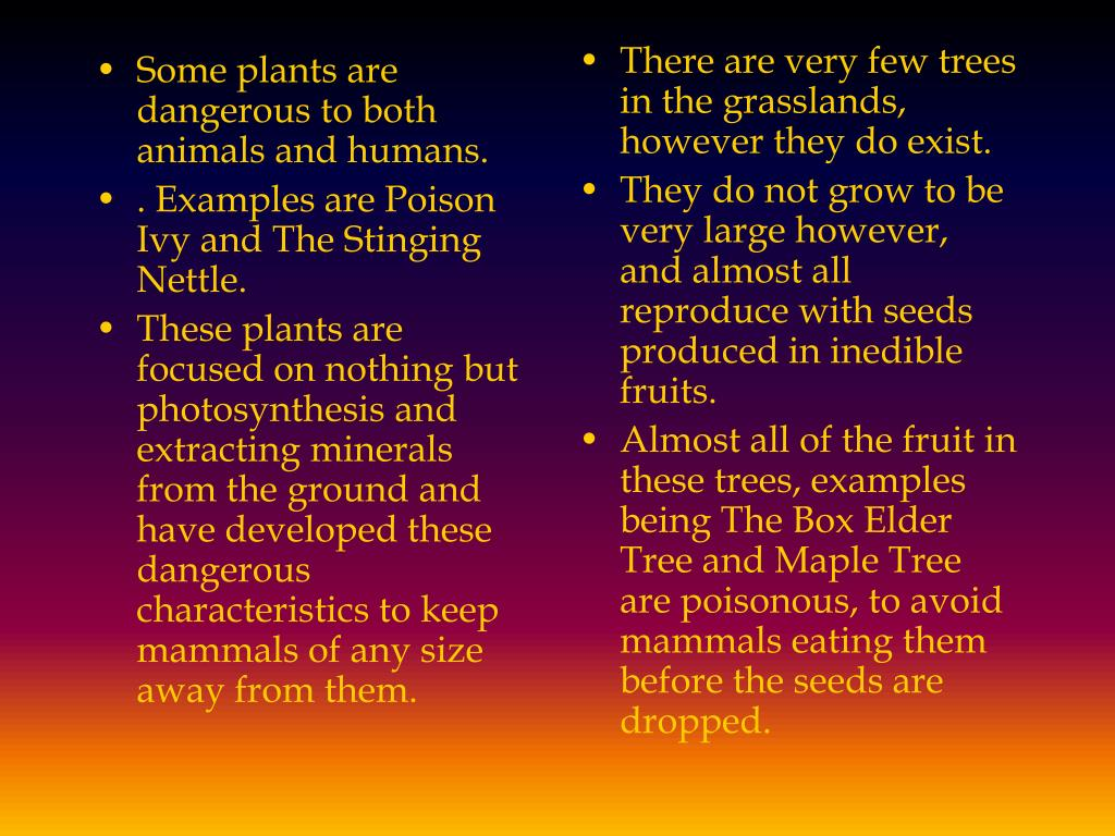 Some plants are dangerous to both animals and humans.