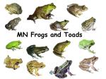 mn frogs and toads