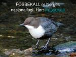 fossekall er norges nasjonalfugl h r fossekall