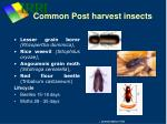 common post harvest insects