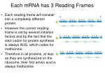 each mrna has 3 reading frames