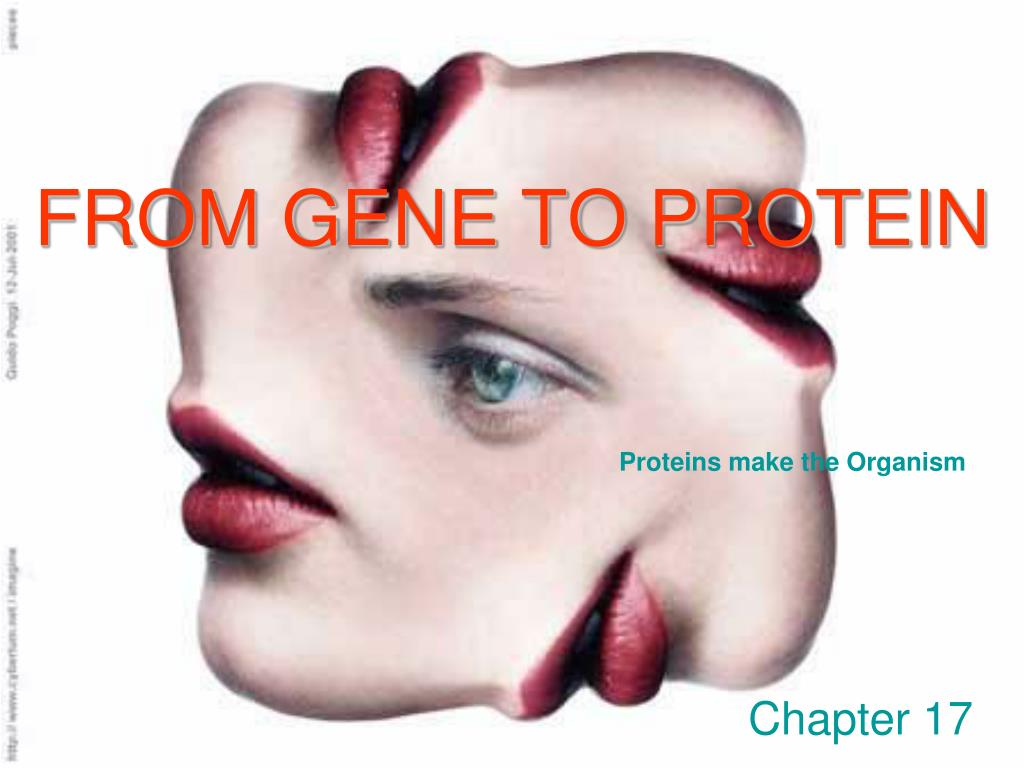 from gene to protein l.