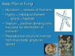 body plan of fungi