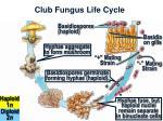 club fungus life cycle17