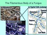 the filamentous body of a fungus
