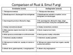 comparison of rust smut fungi