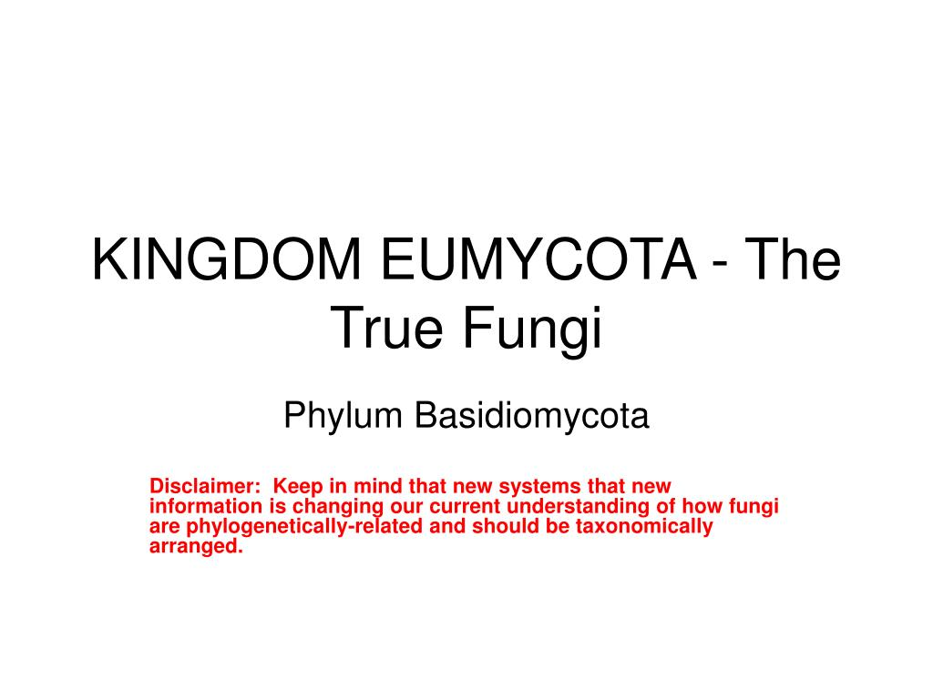 kingdom eumycota the true fungi l.