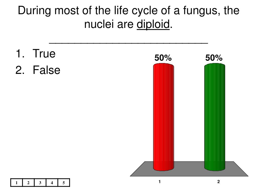 During most of the life cycle of a fungus, the nuclei are