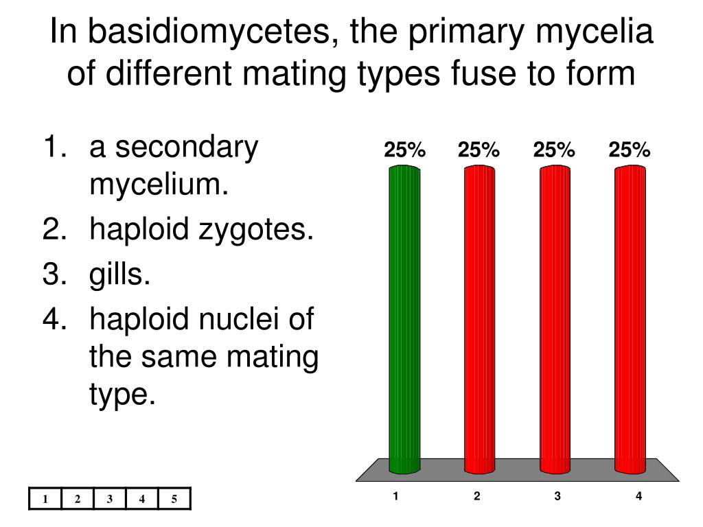 In basidiomycetes, the primary mycelia of different mating types fuse to form