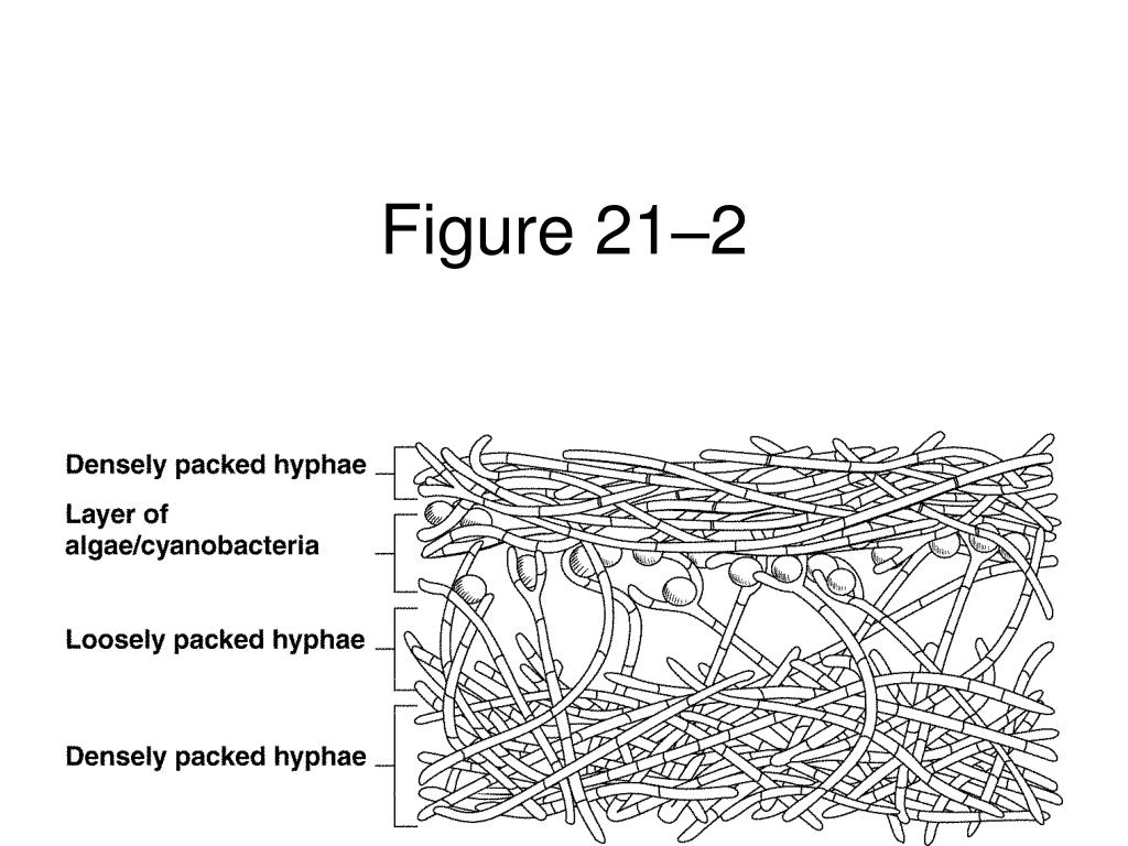 Figure 21–2