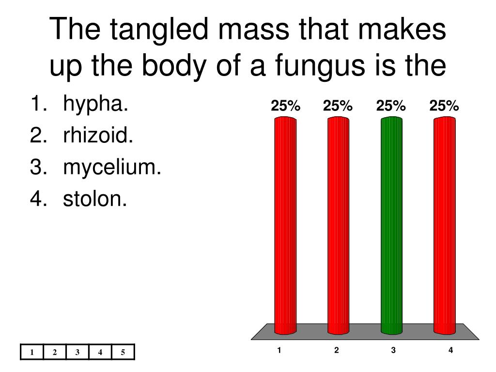 The tangled mass that makes up the body of a fungus is the