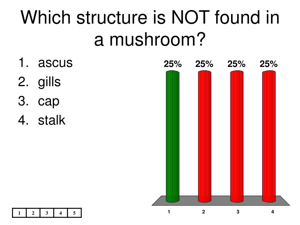 Which structure is NOT found in a mushroom?