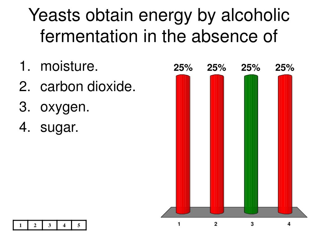 Yeasts obtain energy by alcoholic fermentation in the absence of
