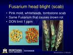 fusarium head blight scab