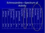echinocandins spectrum of activity