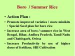 boro summer rice