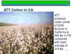 att cotton in ca
