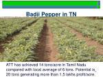 badji pepper in tn