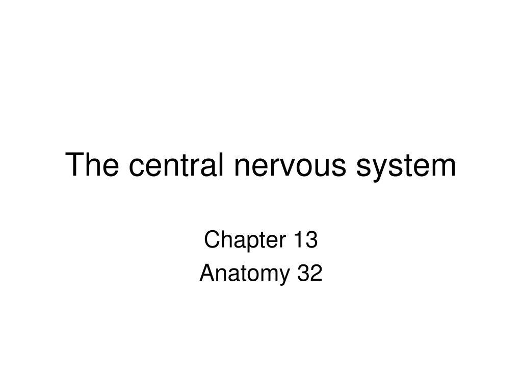 the central nervous system l.