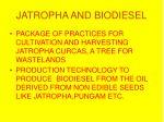jatropha and biodiesel