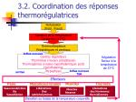 3 2 coordination des r ponses thermor gulatrices53