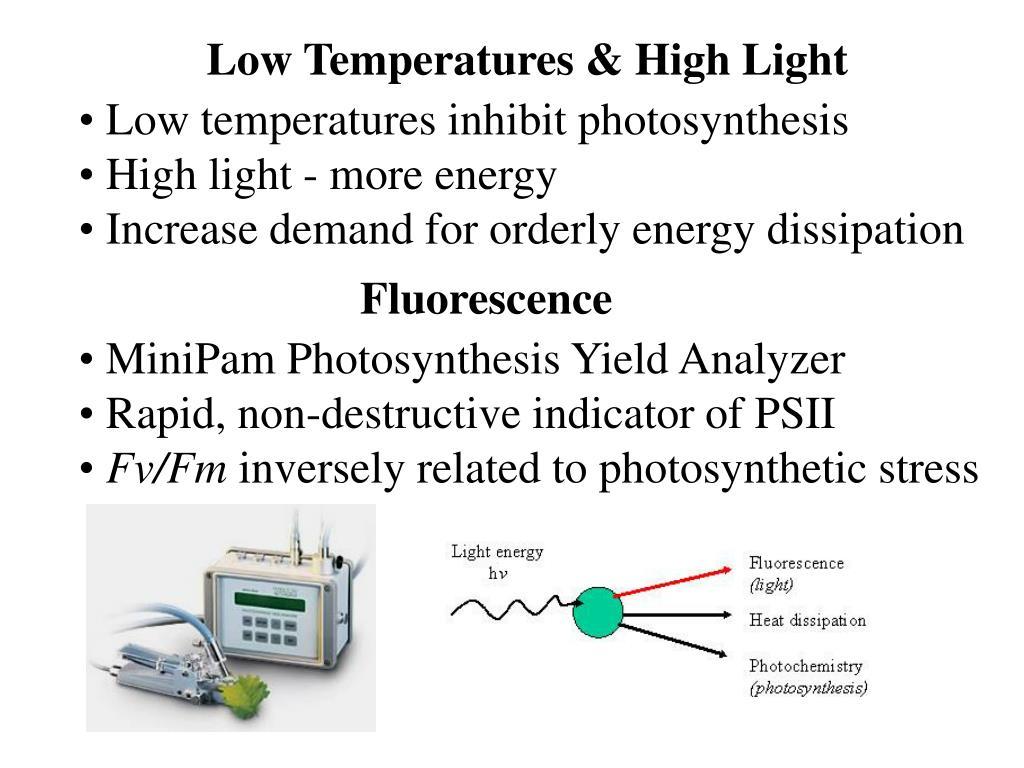 Low Temperatures & High Light