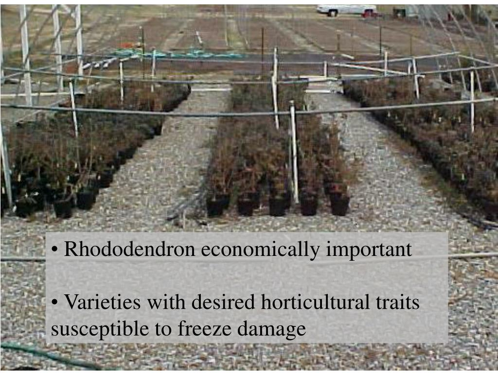 Rhododendron economically important