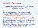 the serine proteases