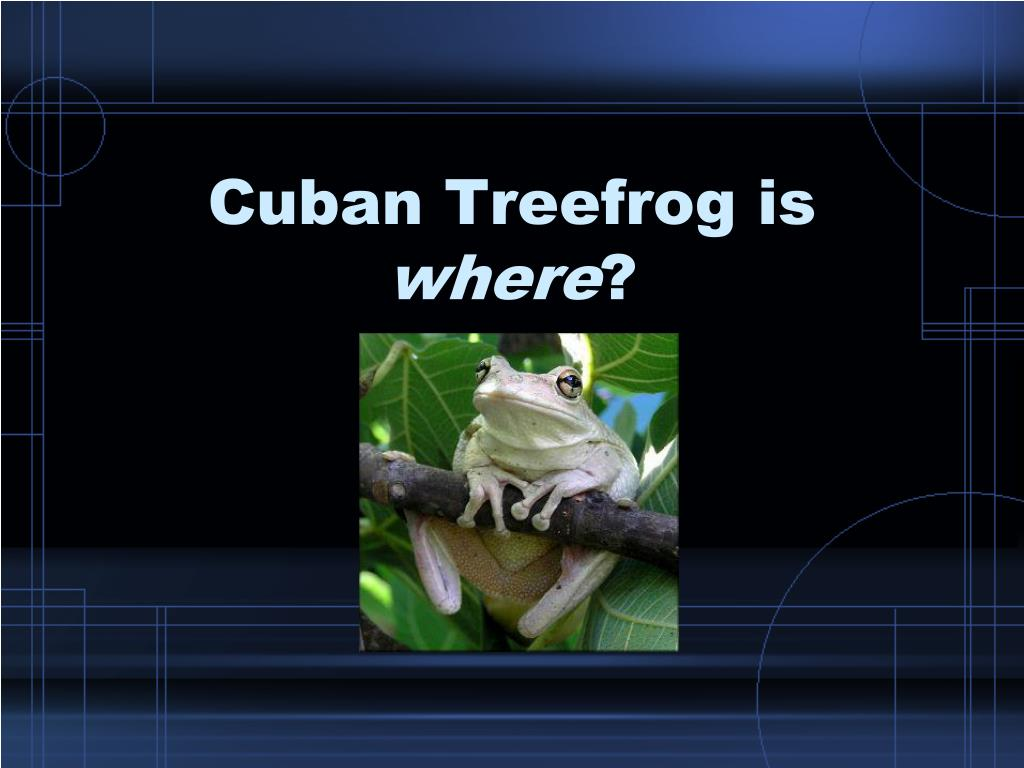 cuban treefrog is where l.