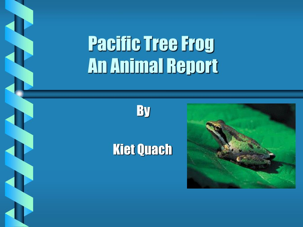 pacific tree frog an animal report l.