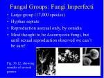 fungal groups fungi imperfecti