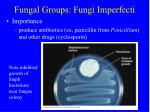 fungal groups fungi imperfecti27