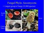 fungal phyla ascomycota