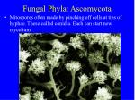 fungal phyla ascomycota11