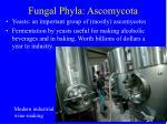 fungal phyla ascomycota12