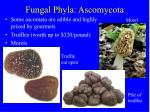 fungal phyla ascomycota14