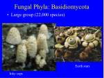 fungal phyla basidiomycota