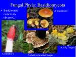 fungal phyla basidiomycota18