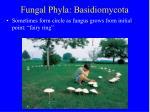 fungal phyla basidiomycota19