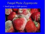 fungal phyla zygomycota