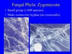 fungal phyla zygomycota5