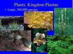 plants kingdom plantae