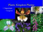 plants kingdom plantae37