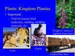 plants kingdom plantae39