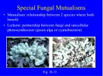 special fungal mutualisms