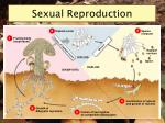 sexual reproduction9