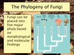 the phylogeny of fungi